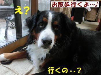 え~!いくの~?雨だよ~??
