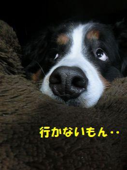行かないっていってんの・・・。