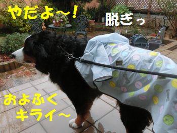 やだもん!雨もおよふくもイヤ~!