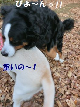 マロンちゃんと遊ぶ~!