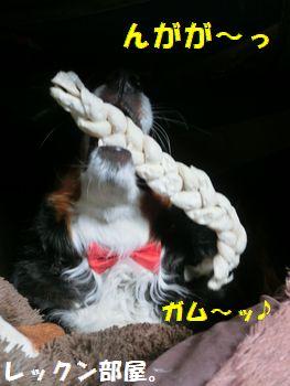 蝶ネクタイなんてきになんな~いっ!