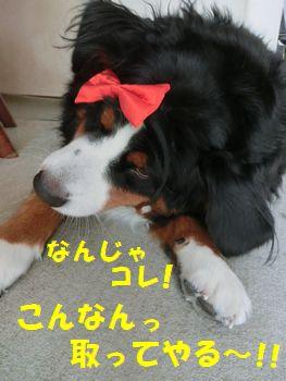 なんじゃこれ!!蝶ネクタイ!?