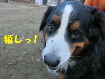 と~っても嬉し!!お散歩最高!!