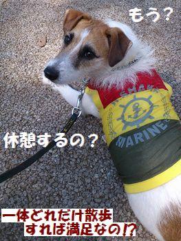 お散歩に休憩なんて!!