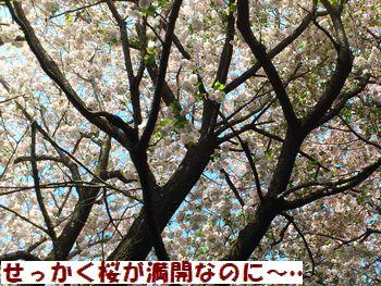 桜だけ撮っておいた・・・。