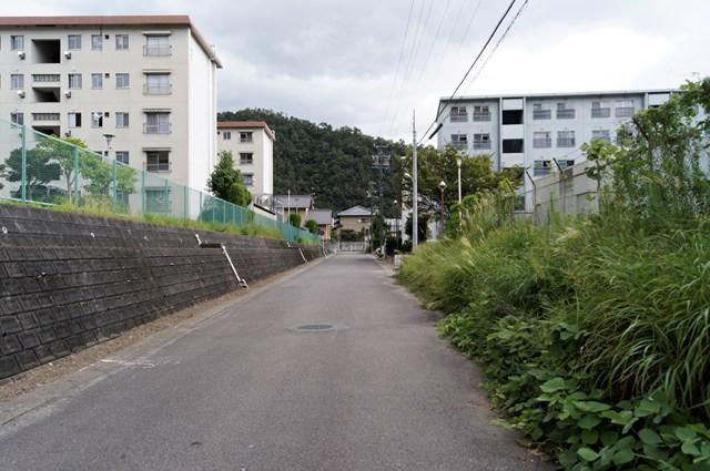ozaki-DSC03176_DxO.jpg