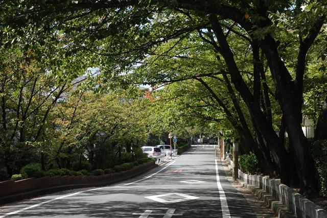 府公社香里三井F団地の並木道