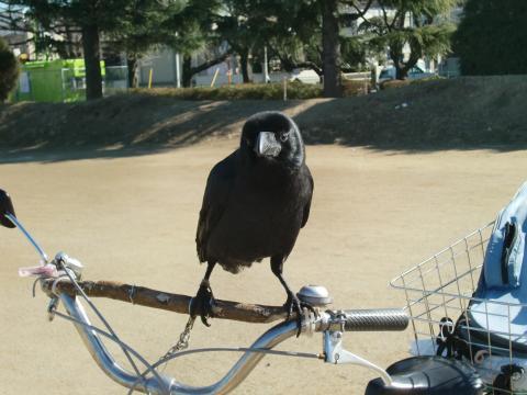 PICT0001_convert_20110120002423.jpg