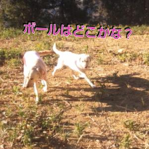 fc2_2014-01-06_03-13-02-746.jpg