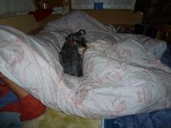 室戸綺羅メッセ ベッド