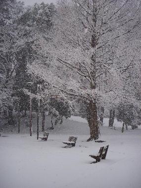 12年雪の日ー4