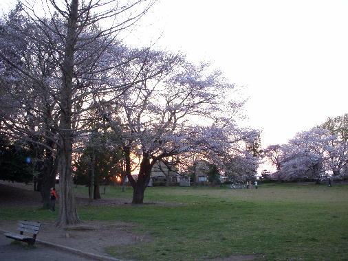 セントラルパーク2011415-1