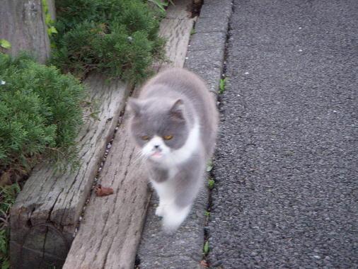 ぶさかわ猫2
