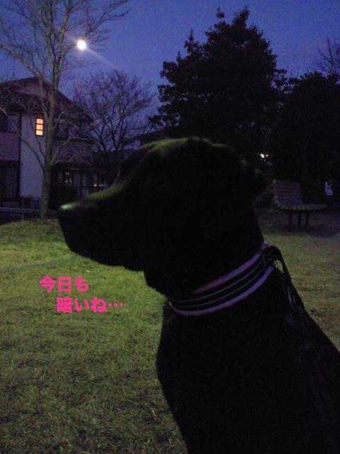 夜散歩3x