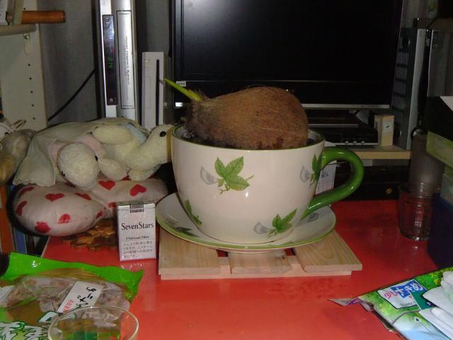 ココヤシを植えたよ2