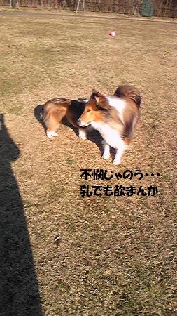 授乳 竜太 (253x450)