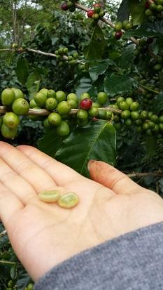 2014 コーヒー豆