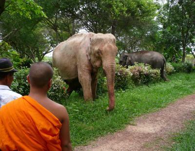 白象黒象僧侶
