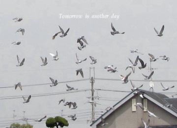 11-04-21-04_20110518221103.jpg