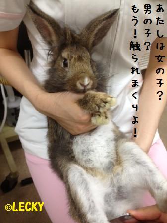satoru2012082411.jpg