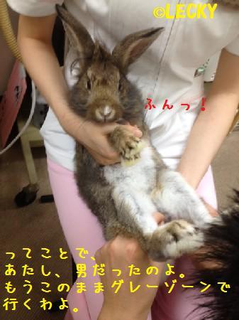 satoru2012082421.jpg