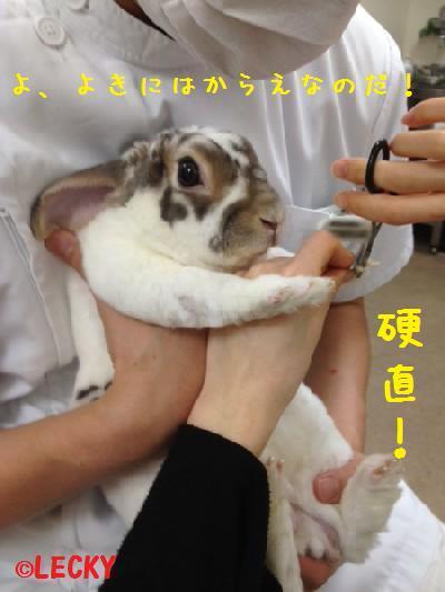 tsumekiri111.jpg