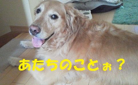 2012081107290000.jpg