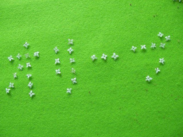 花オリーブ