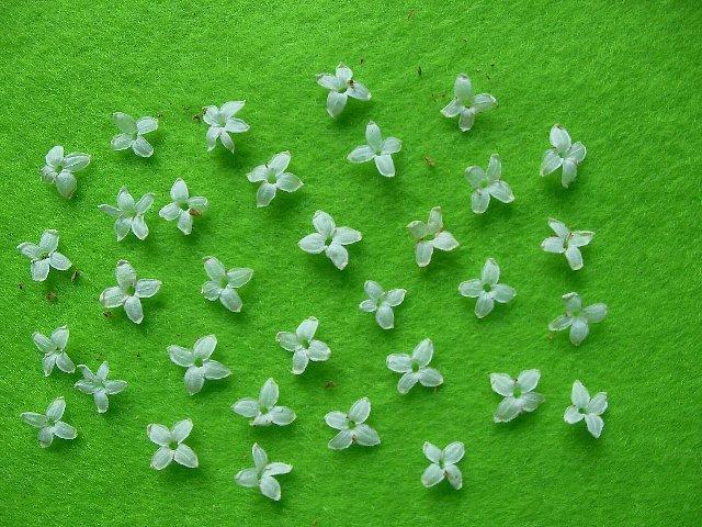 花オリーブアップ