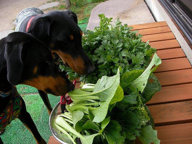 私の野菜だよ