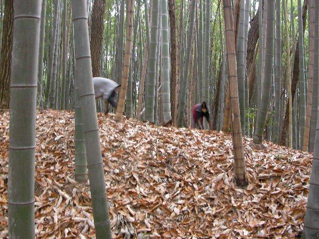 113竹取の翁①