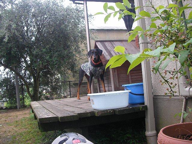 洗面器&エミリー