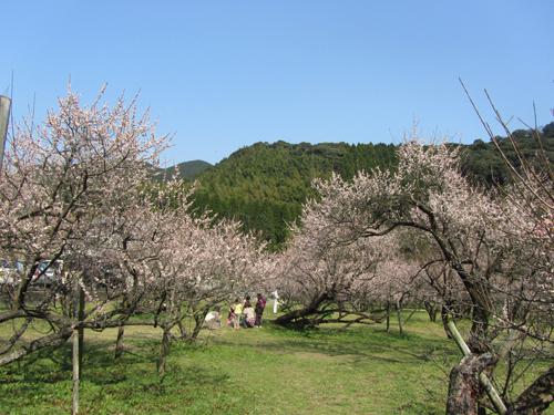 hujikawa.jpg