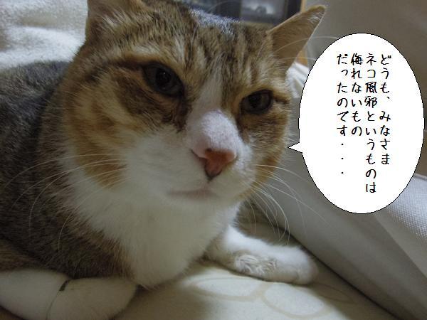 ネコ風邪1
