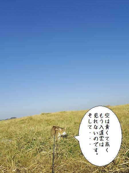杉のヶ原放牧場5