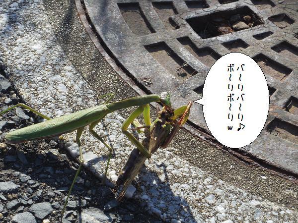 杉のヶ原放牧場9