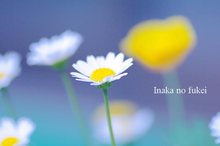 IMGP9973.jpg