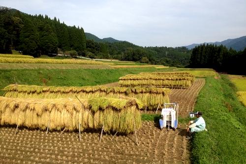 261004 稲刈り23