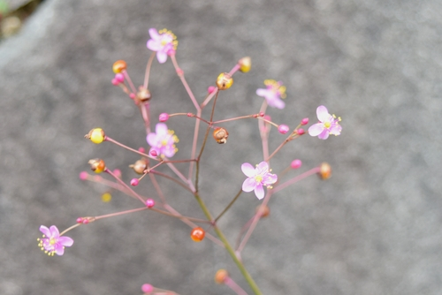 261015 花15