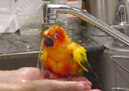 水浴びルーア