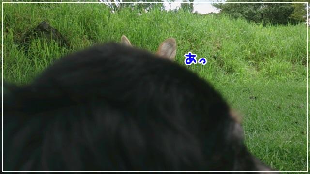 DSC_8003.jpg