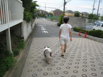 散歩に出発
