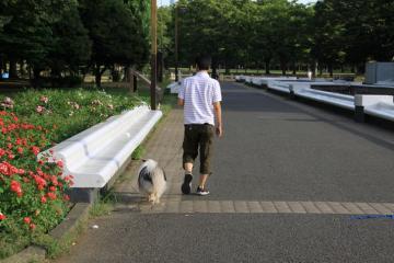 早朝散歩!