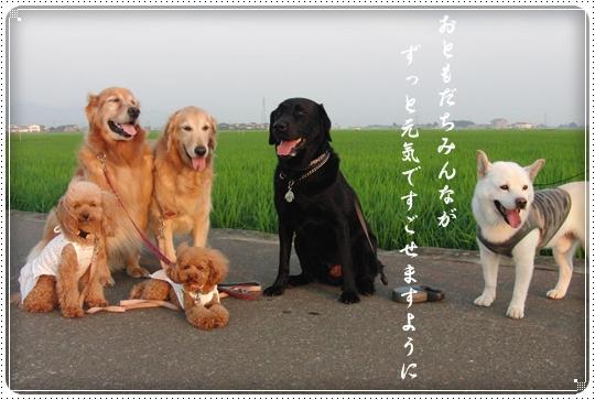 2010,7,7七夕10