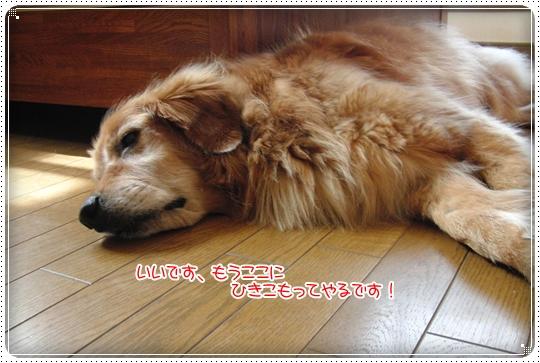 2010,7,8お散歩6