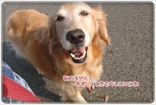 2010,7,8お散歩2