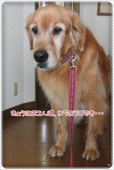2010,7,8お散歩1