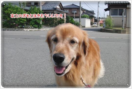 2010,7,8お散歩7