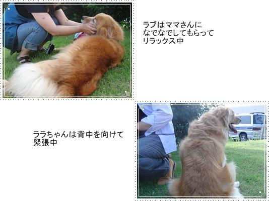 2010,7,10お散歩5