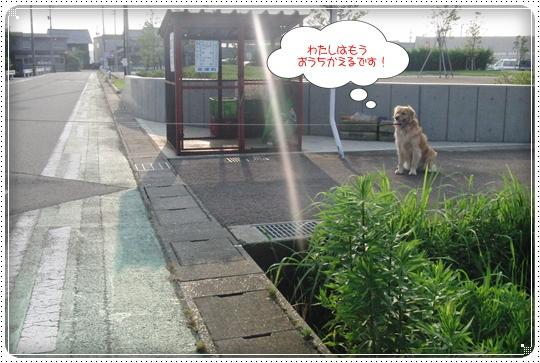 2010,7,10お散歩10